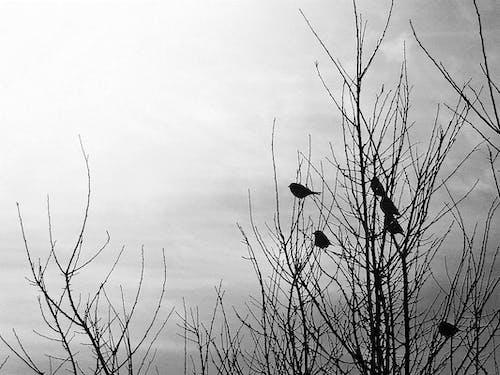 Ilmainen kuvapankkikuva tunnisteilla eläin, lintu, musta ja kulta tapetti