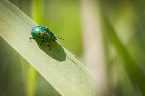 Ilmainen kuvapankkikuva tunnisteilla bokeh, hyönteinen, kasvi