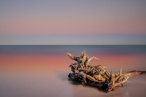 Dry wooden branches on sandy beach of calm ocean reflecting picturesque sunset sky
