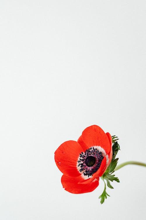 Kostenloses Stock Foto zu blühen, blumen, blüte