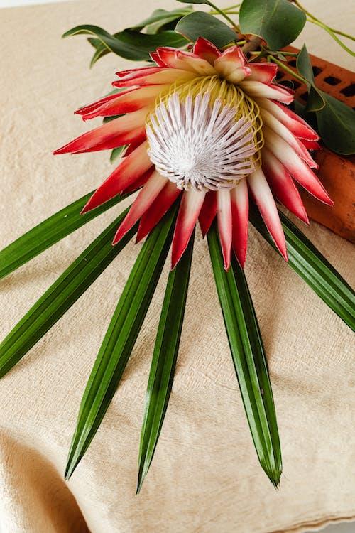 Immagine gratuita di colpo del primo piano, fiore, foglie verdi