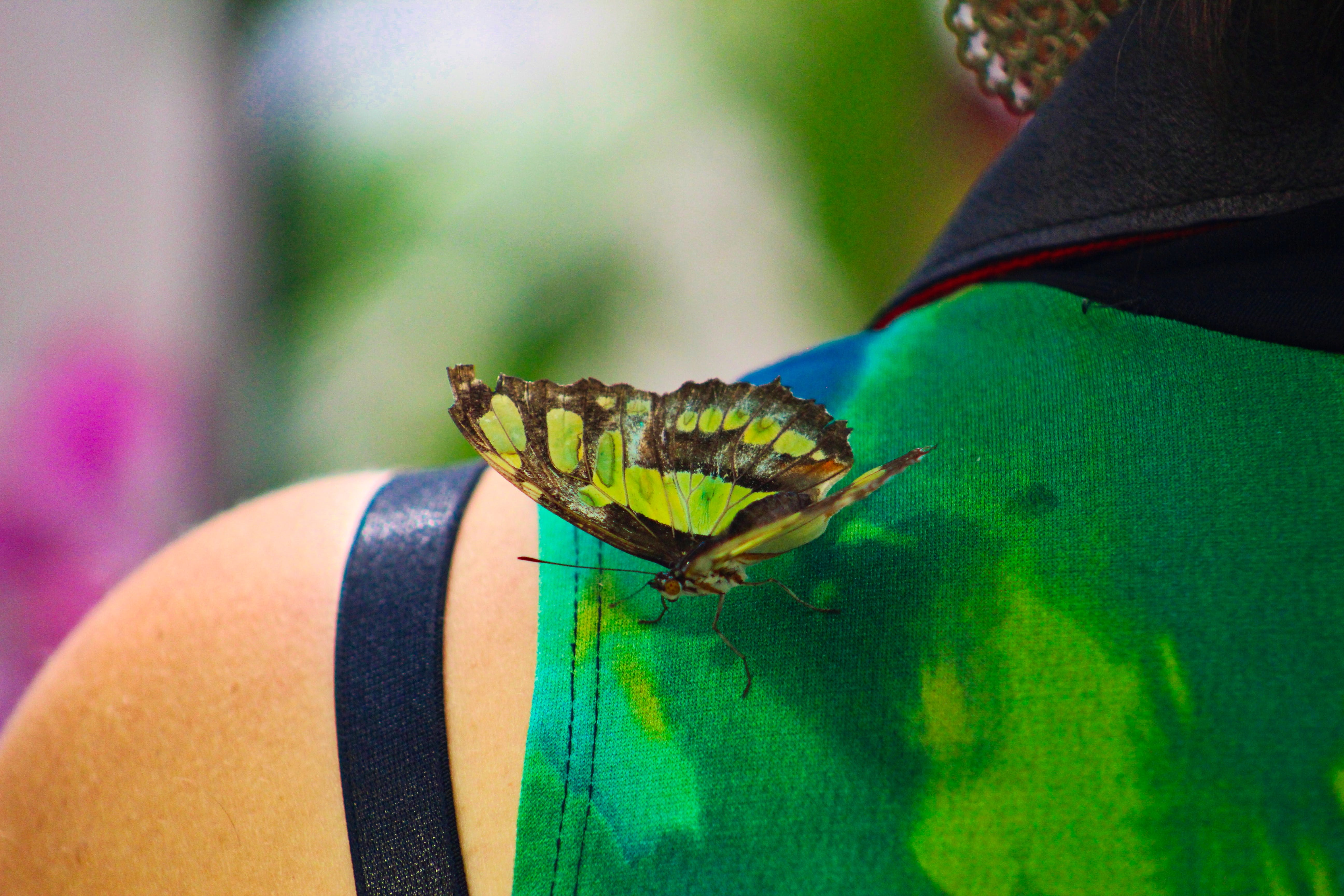 Free stock photo of butterfly, Butterfly on shoulder