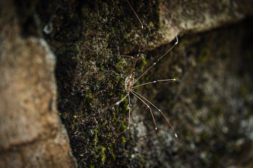 Ingyenes stockfotó fa, gerinctelen, hátborzongató témában