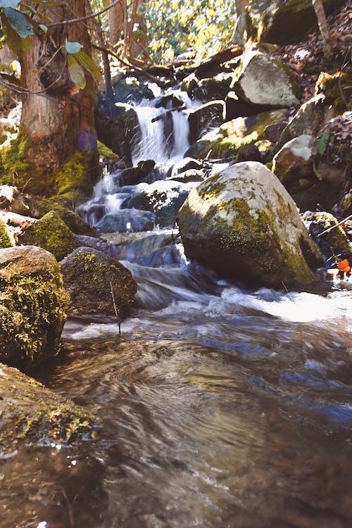 Gratis stockfoto met bed van rotsen, h2o, rivier