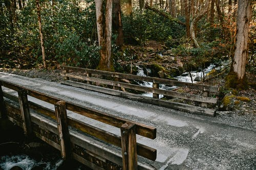 Free stock photo of bridge, forest, river