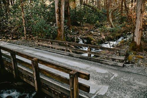 Gratis stockfoto met Bos, brug, rivier