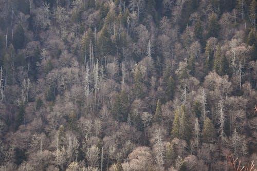 Gratis stockfoto met bomen, Bos, rokerige bergen