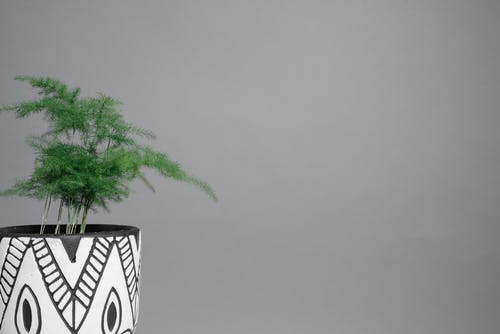 Green Plant on White and Black Ceramic Pot