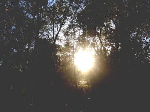 คลังภาพถ่ายฟรี ของ florest, floresta, mata, การถ่ายภาพธรรมชาติ