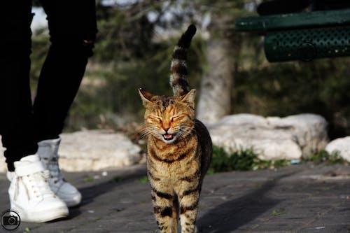 Free stock photo of #catstagram #catoftheday #kitten #cats_of_instagra