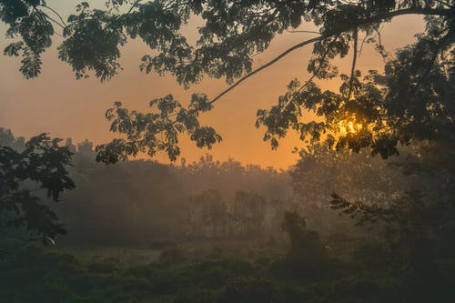 Free stock photo of asia, dawn, fog