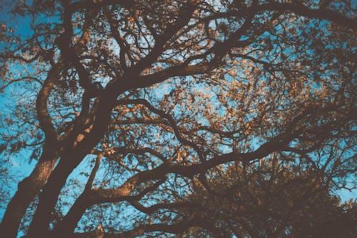 คลังภาพถ่ายฟรี ของ กลางวัน, ก้าน, ฉาก, ท้องฟ้า