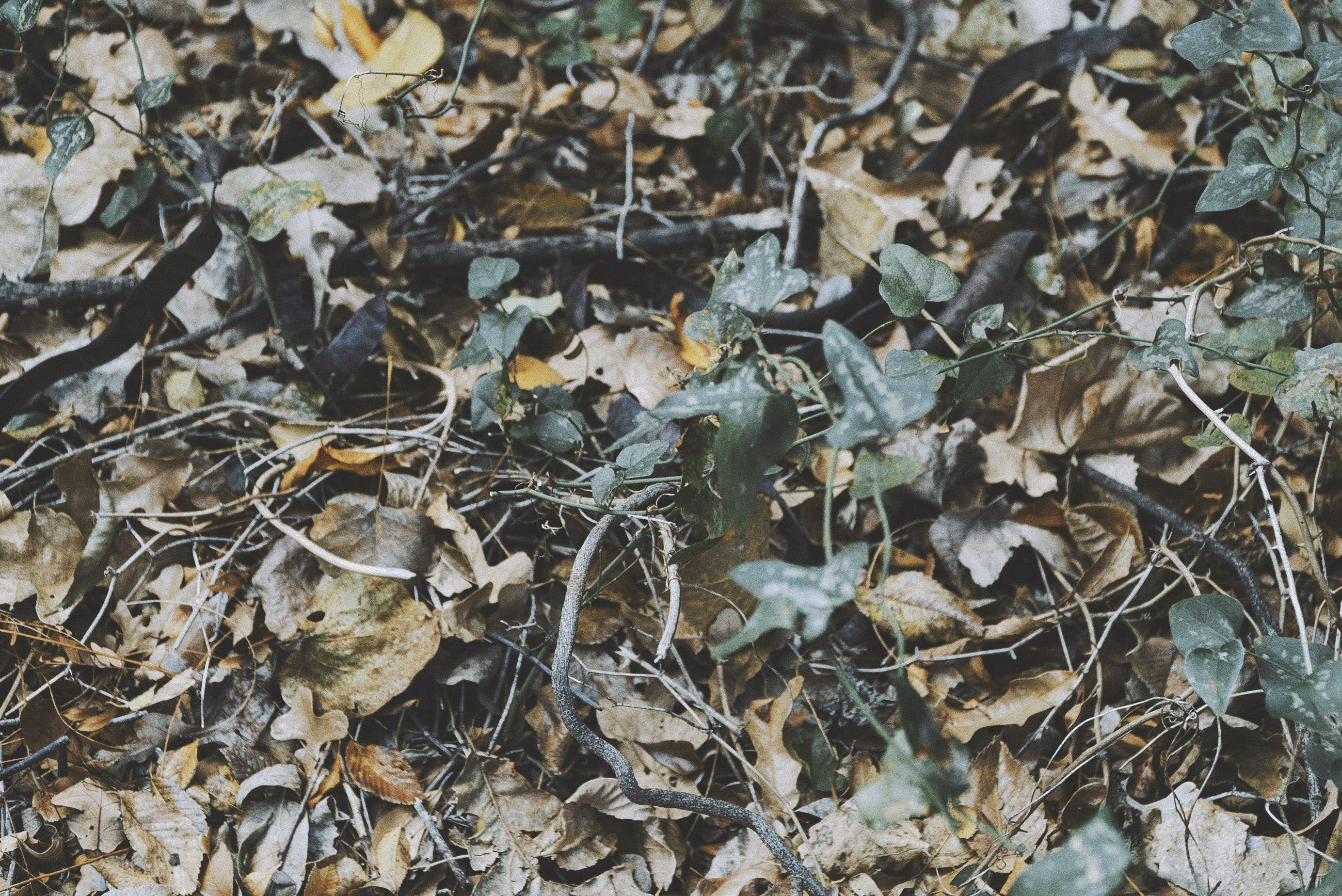 Free stock photo of autumn leaves, dry leaves, fall
