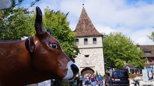 Free stock photo of animal, castle, cow