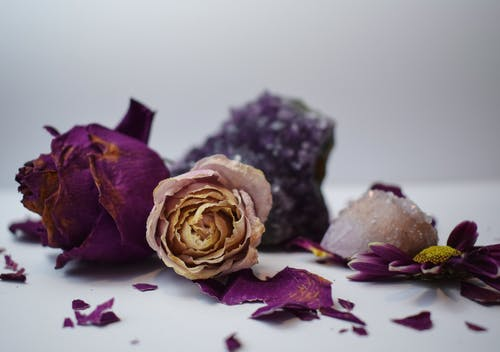 Dried rose buds with wavy petals near chrysanth flower and crystals on smooth surface on light background