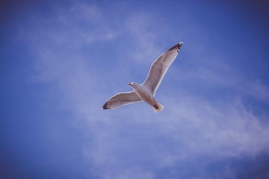 Free stock photo of flight, sky, bird, flying
