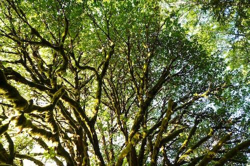 Free stock photo of green, tree