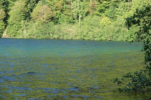 Free stock photo of lake, water
