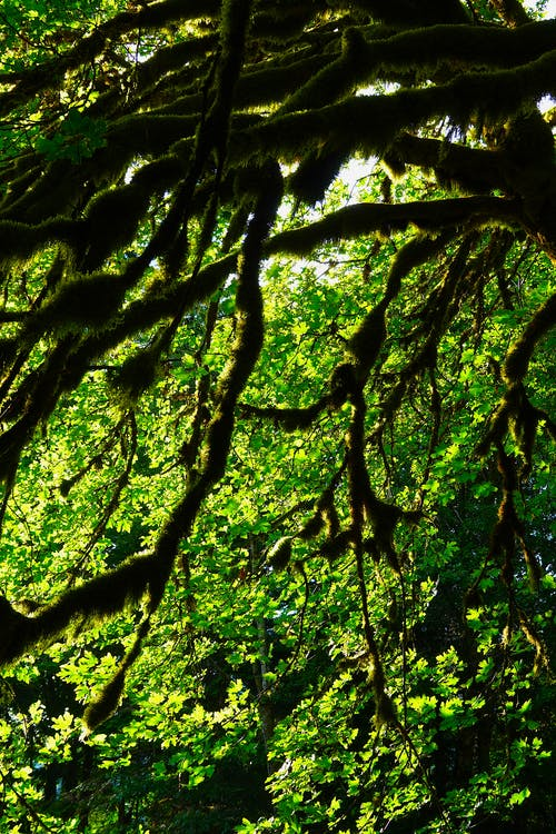 Free stock photo of leaves, tree green