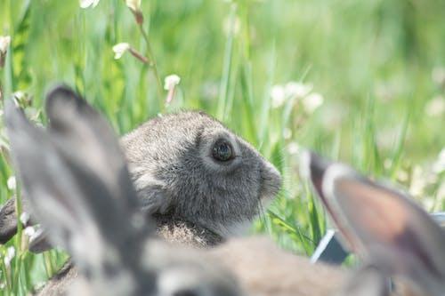Free stock photo of animal photography, rabit