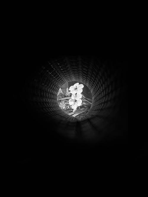 คลังภาพถ่ายฟรี ของ esten erbol, гүл, естенербол