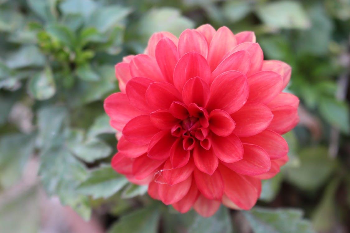 anlegg, blomst, makro