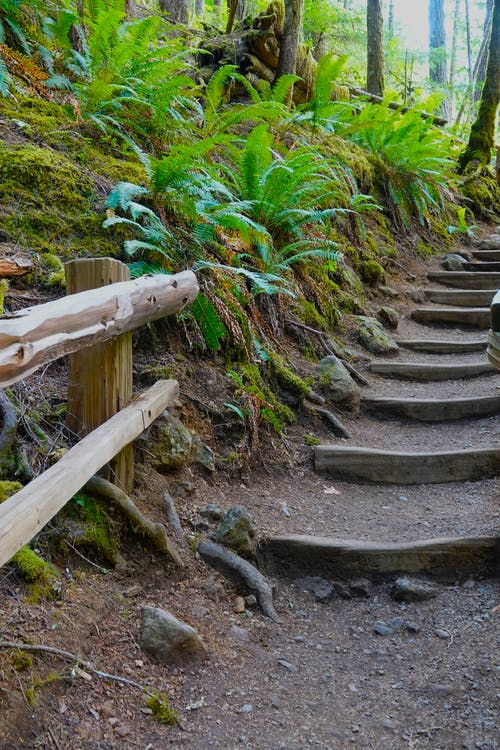 Free stock photo of path, stairs