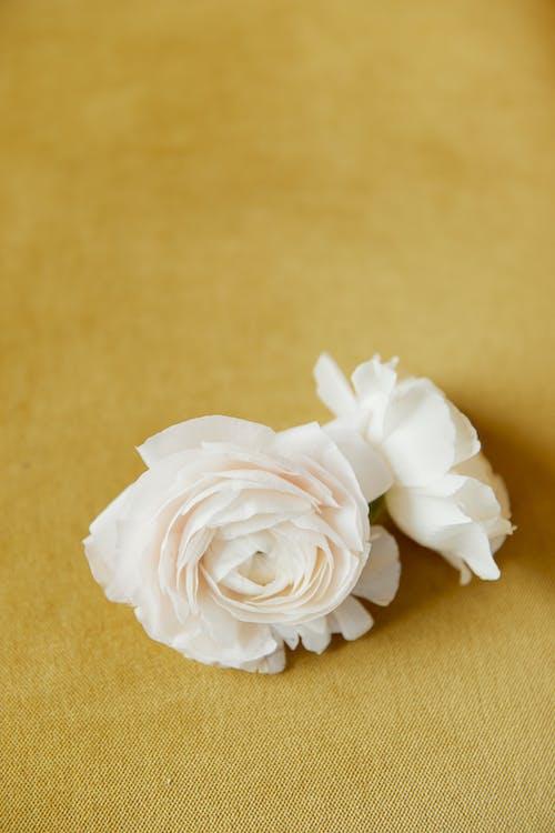 Gratis lagerfoto af flora, gult stof, hvide blomster