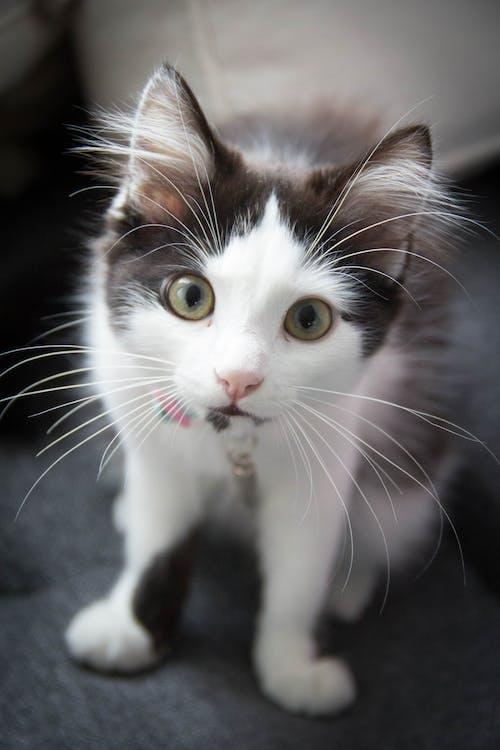 Close-Up Shot of a Kitten Looking at Camera