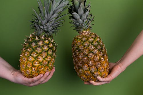 Crop unrecognizable people with whole ripe pineapples for healthy diet in hands standing on green background in modern light studio