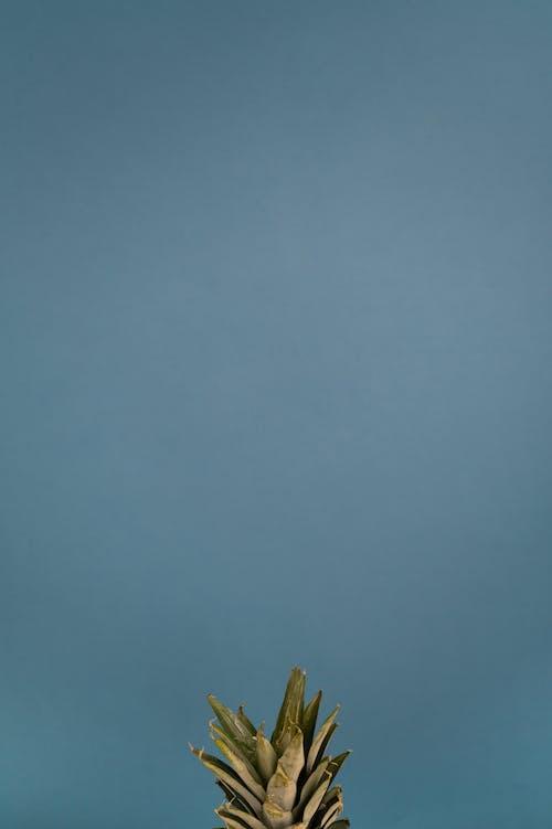 Immagine gratuita di ananas, angolo alto, appuntito