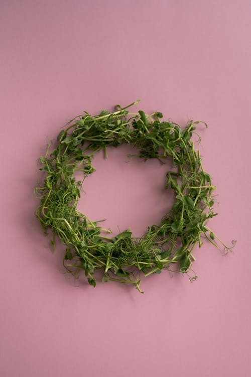 From above shot of wreath of fresh green leaves and grass placed on middle of pink background