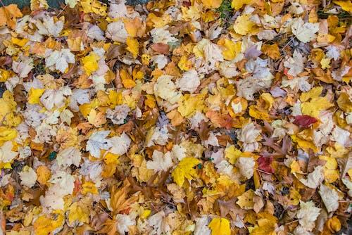 Free stock photo of autumn, background, fall