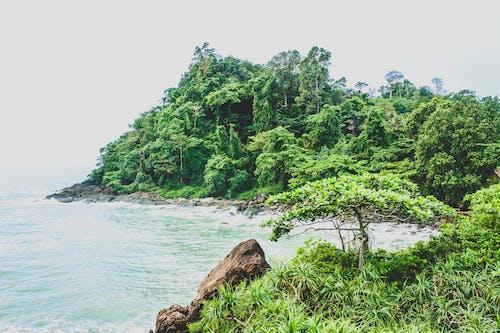 Photos gratuites de arbres, bois, bord de mer, cailloux