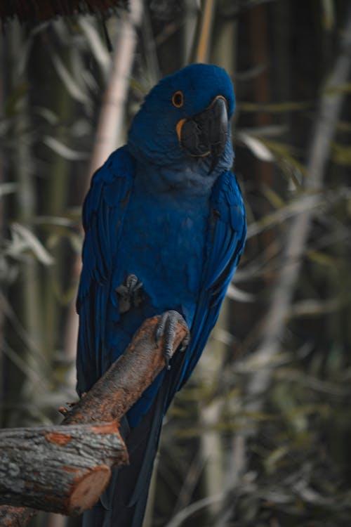 Free stock photo of animal, colorful, wildlife
