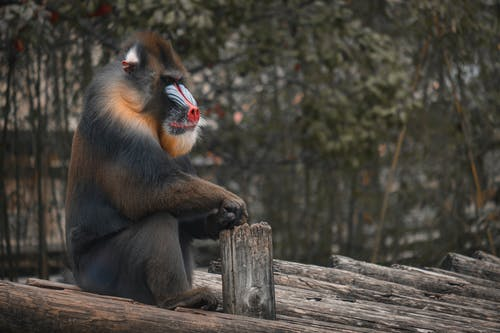 Brown Monkey Sitting on Brown Wooden Fence