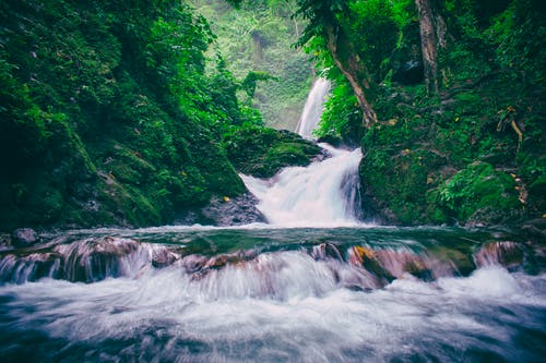 Fotos de stock gratuitas de agua, arboles, bosque, caídas