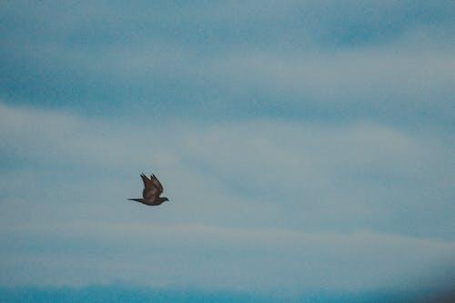 Foto profissional grátis de animal, ave, aviário