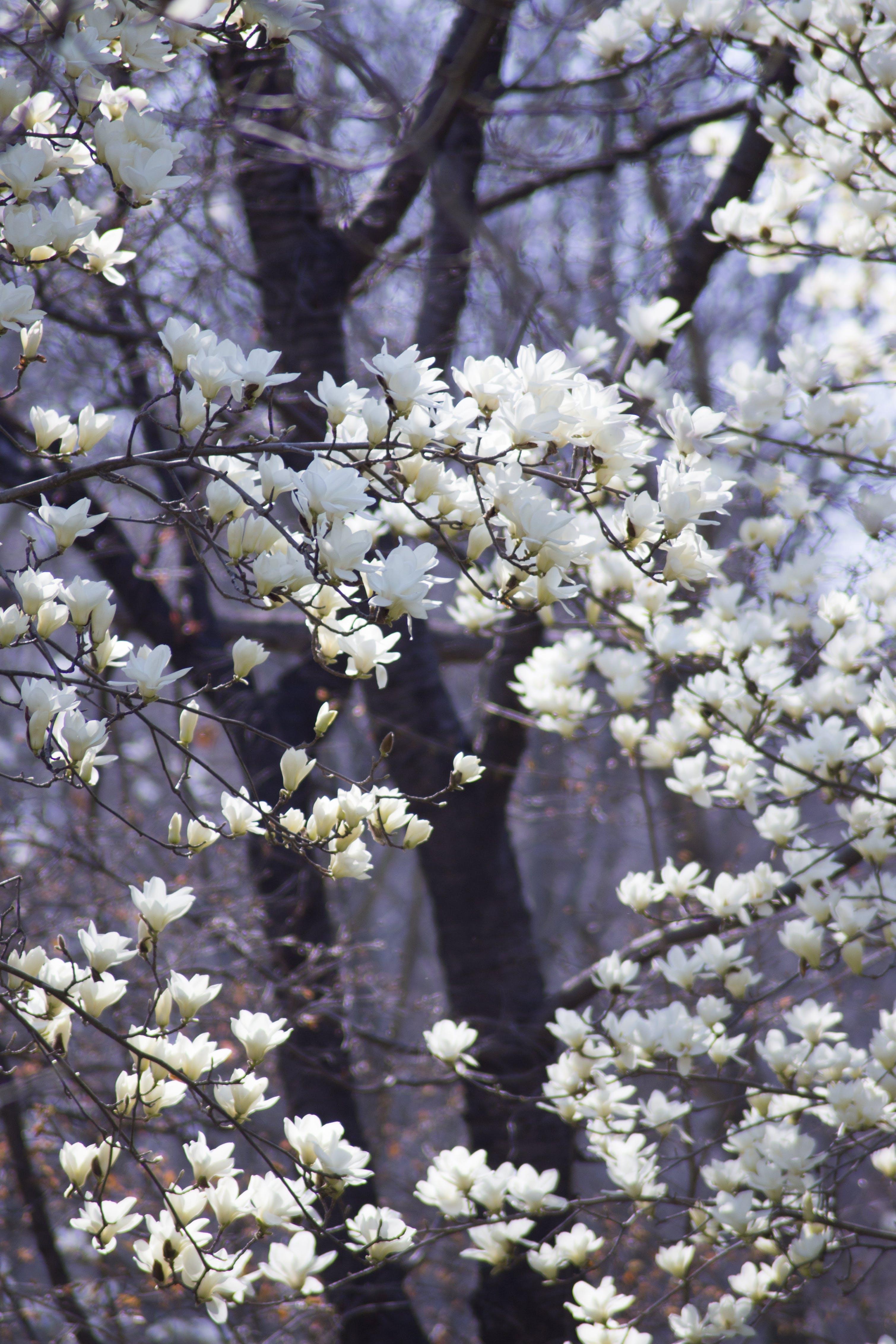 beautiful flowers, blossom, flower