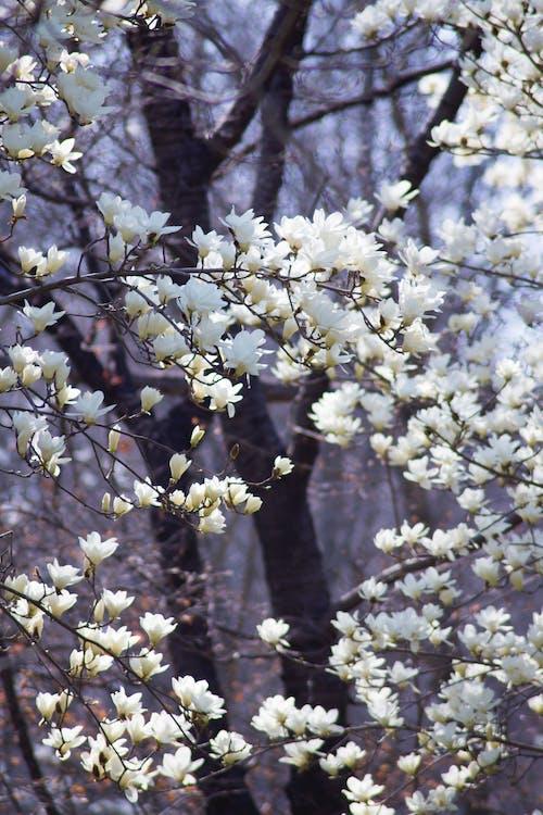 Free stock photo of beautiful flowers, blossom, flower
