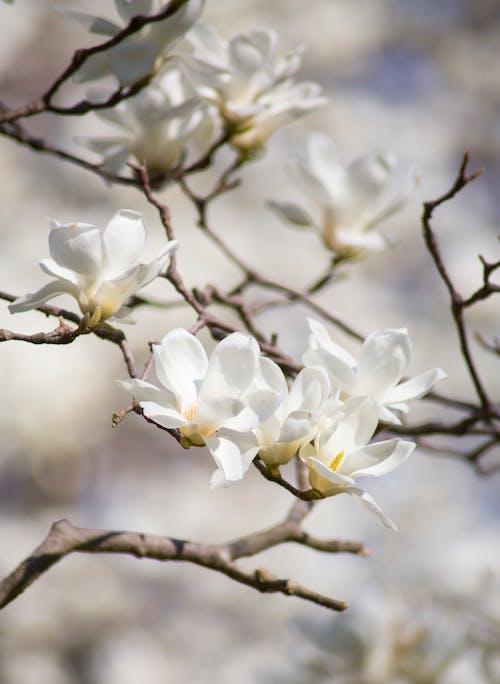 Gratis arkivbilde med anlegg, apple, årstid, blomst
