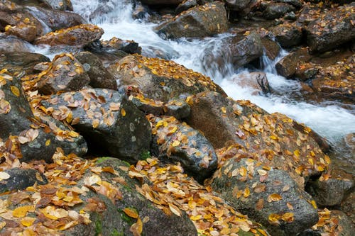 Gratis lagerfoto af å, løv, sten, vandløb