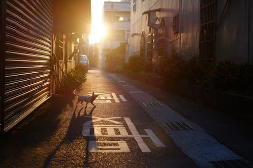Δωρεάν στοκ φωτογραφιών με αργός, διάδρομος, δρομάκι