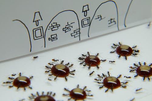 Δωρεάν στοκ φωτογραφιών με micro, μυρμήγκι