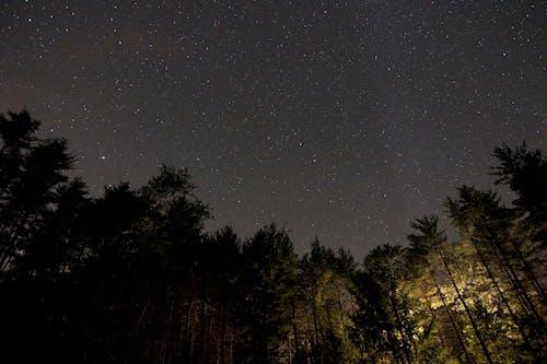 Ảnh lưu trữ miễn phí về cây, sao, Thiên hà, đêm