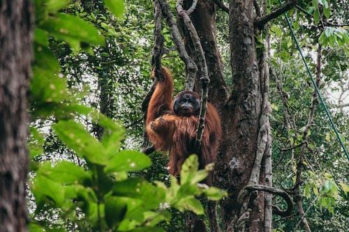 Foto profissional grátis de animais em estado selvagem, animais selvagens, animal