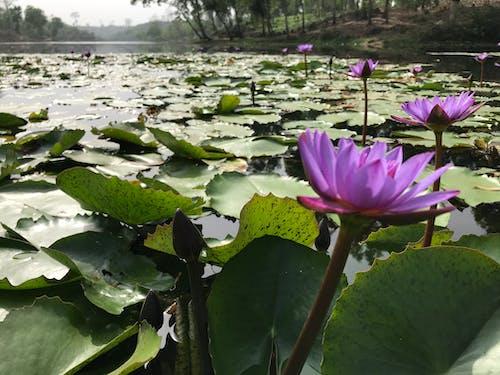 Free stock photo of calm water, day light, lake
