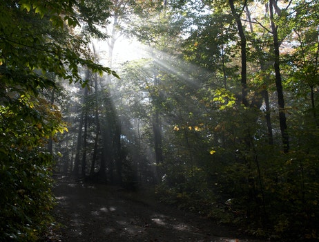 Free stock photo of forest, trees, ray of sunshine, sunlight