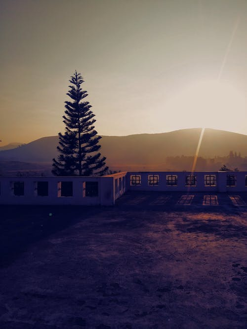 Concrete Bench Near Pine Tree Background of Mountain during Sunset