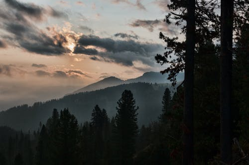 Gratis stockfoto met berg, bomen, Bos, conifeer